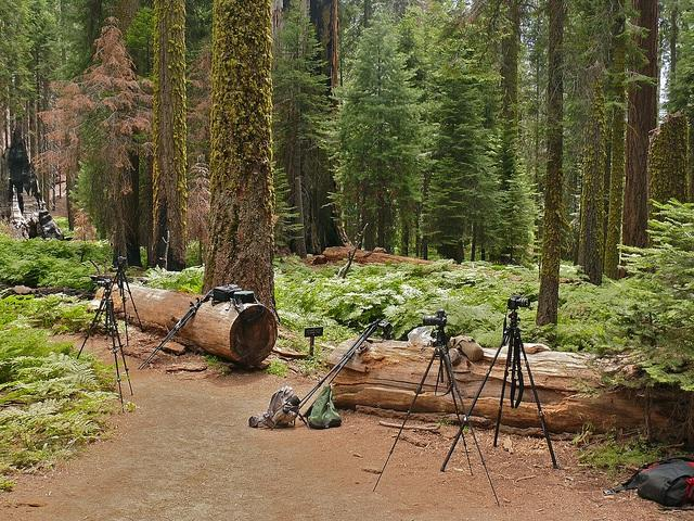 forest, cameras, media