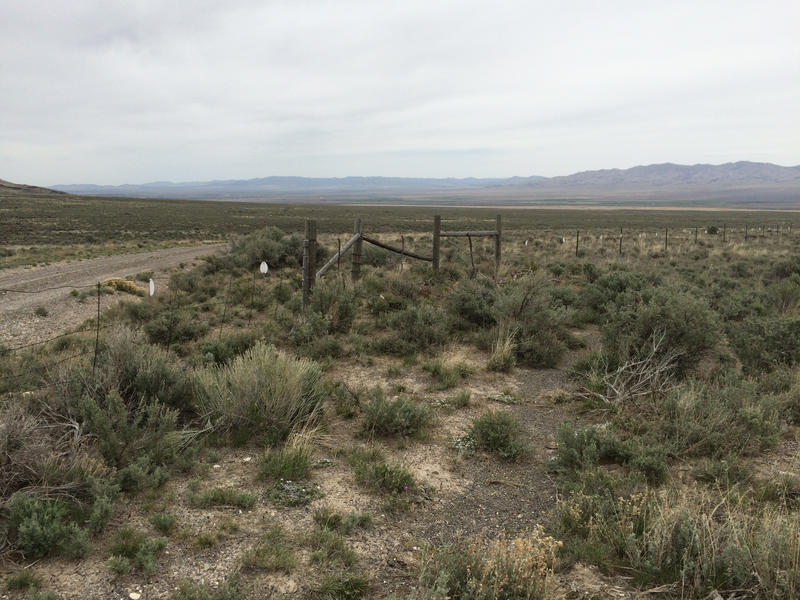 Sagebrush habitat outside Burley, Idaho.