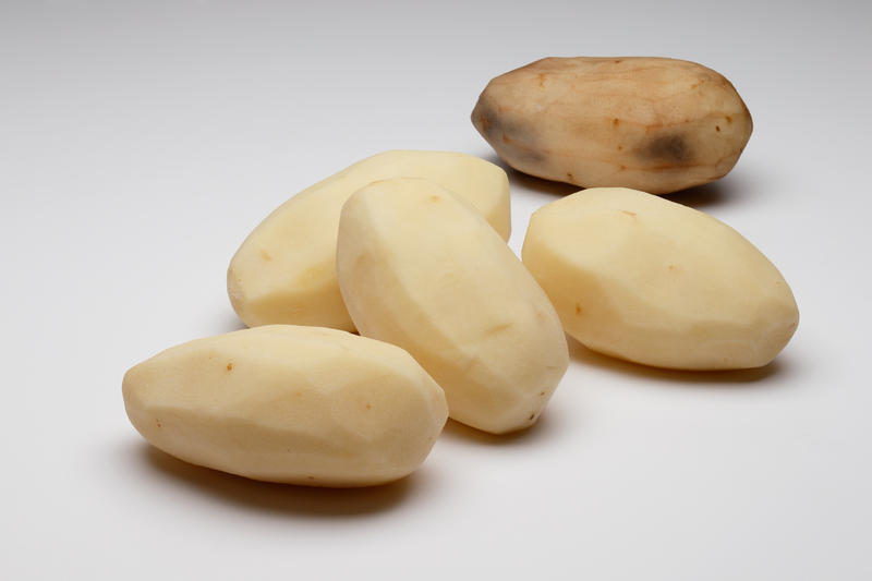 The Simplot company's genetically engineered Innate potatoes, compared with a conventional potato