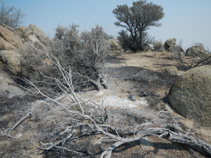 Aftermath of the Soda Fire