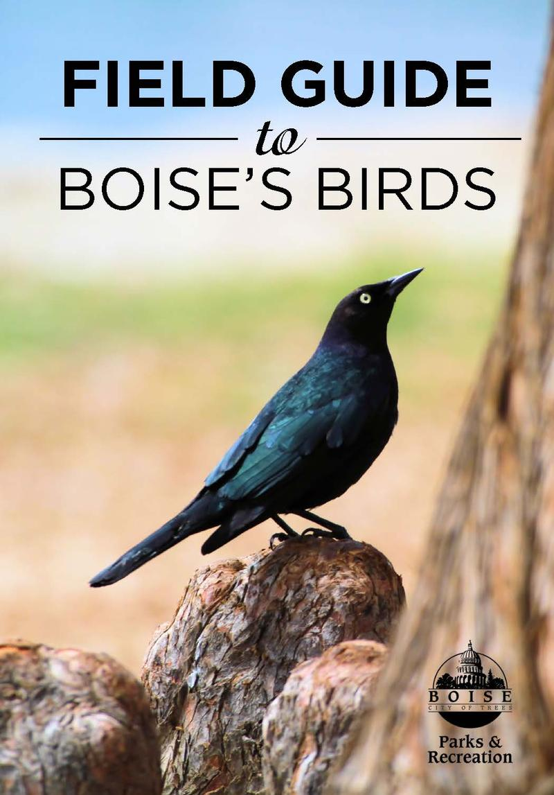 The cover of the guide features a Brewer's Blackbird photographed in Ann Morrison Park