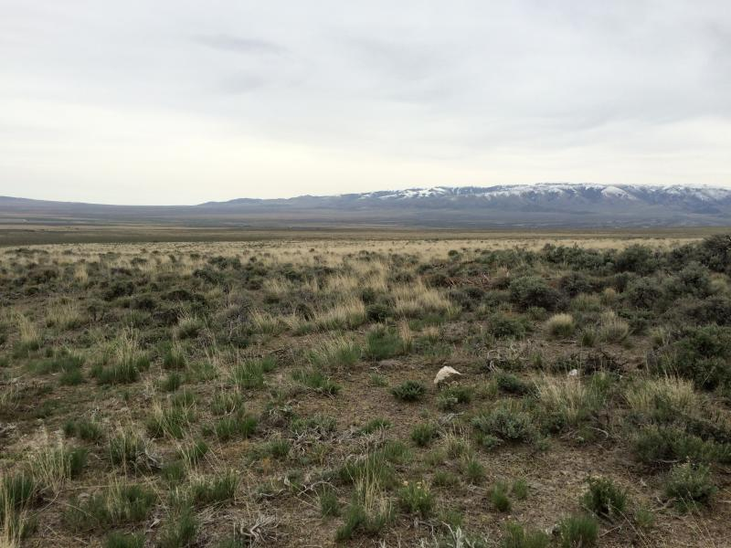 There's still a lot scientists don't know about how certain grazing practices impact sage grouse.