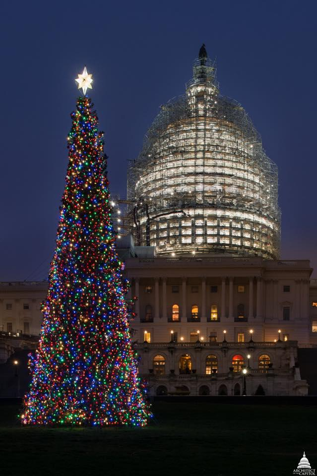 Each year a different forest supplies the Capitol Christmas tree. The 2015 Christmas tree was a Lutz spruce from Alaska.