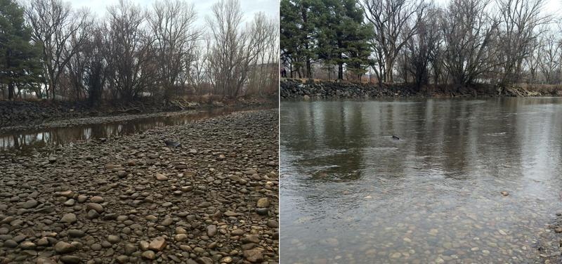 The Boise River on February 4, 2015. The photo on the right was taken three hours after the one on the left, after water began refilling the river bed. A power outage from a dam leased by Ada County was to blame.