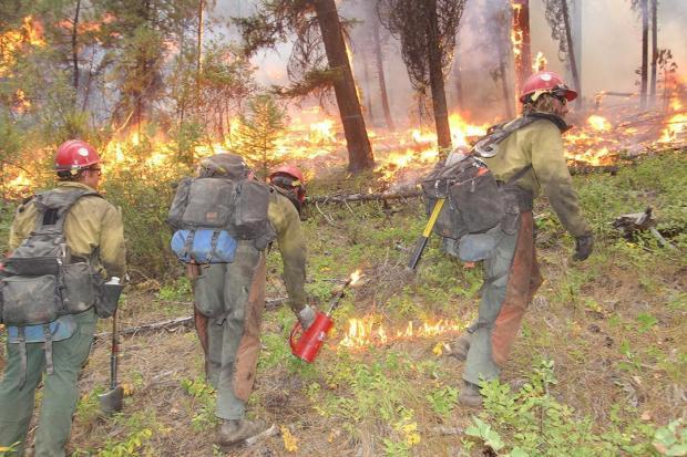 Black Mountain Hotshots on the northwest flank of the Pioneer Fire.