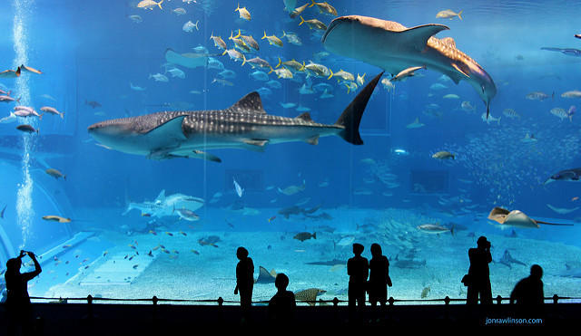 No, it's not this kind of shark tank.