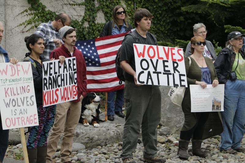 Opponents of the state's decision to eradicate a wolf pack in order to protect cattle protest outside of the Washington Department of Fish and Wildlife, Thursday, Sept. 1, 2016, in Olympia, Wash.