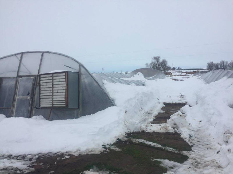 Damage to greenhouses at one southwest Idaho organic farm threaten the producer's business.