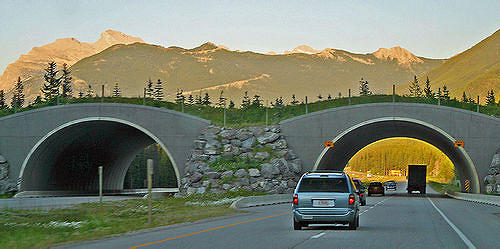 Animal overpass near Banff.