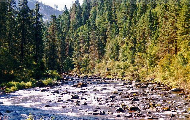 File photo of the South Fork of Clearwater River.