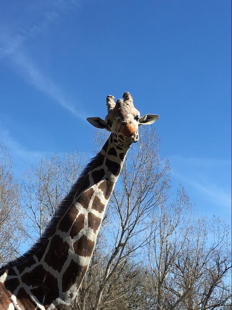 Julius Longfellow at Zoo Boise