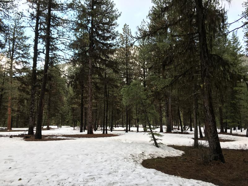 Spring snow in the Boise National Forest. Forecasters say there are about two million acres worth of snow left to melt in the Boise drainage.