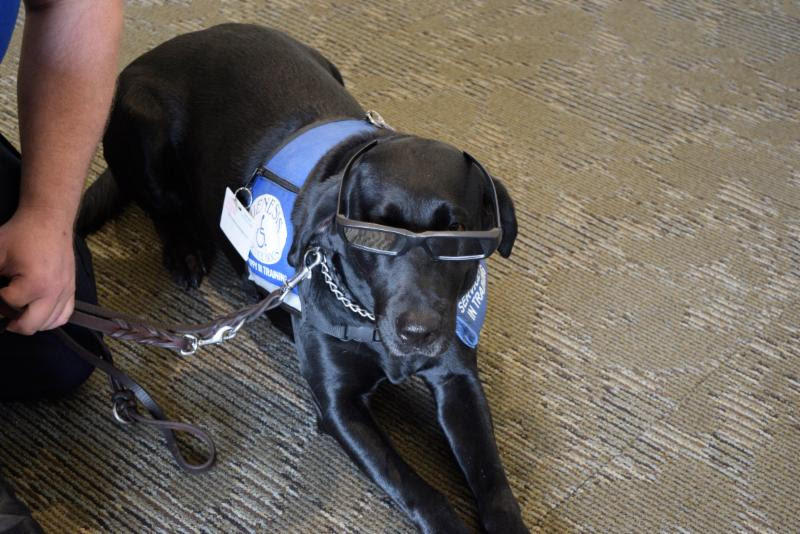 Even this therapy dog from St. Luke's gets into the act, with his own set of protective glasses.