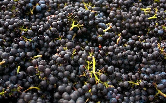 The Idaho Wine Commission says some winemakers are having to buy grapes out of state to make up for a poor harvest.