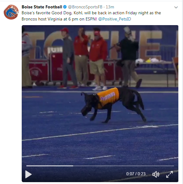 Kohl the tee-retriving black lab has gone viral -- again.