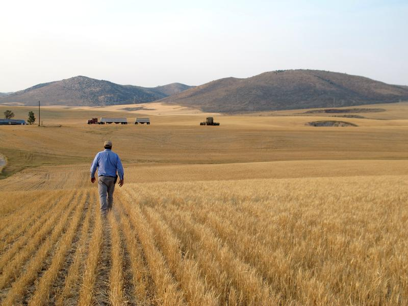 File photo of an Idaho farmer in his wheat field.