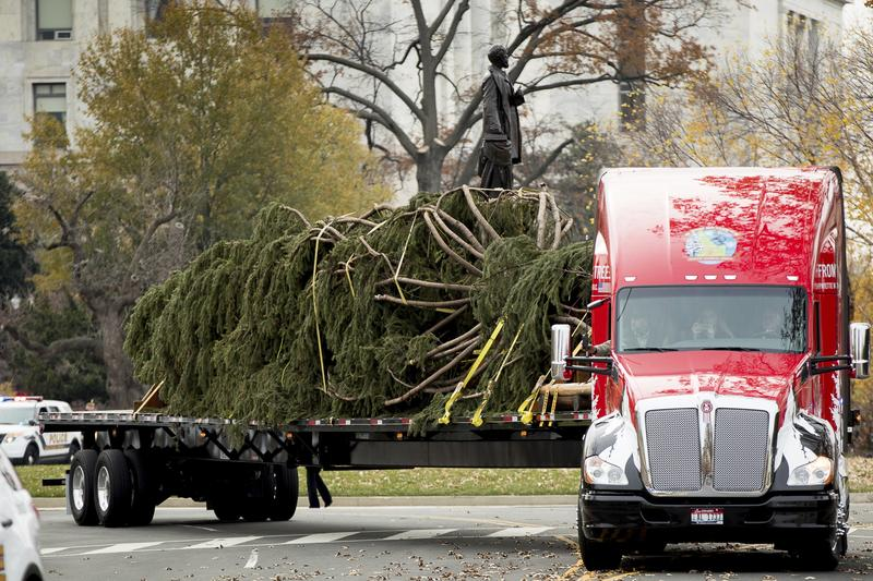 The 2016 U.S. Capitol Christmas Tree arrives to the West Lawn of the U.S. Capitol Building in Washington, Monday, Nov. 28, 2016, from the Payette National Forest in Idaho.