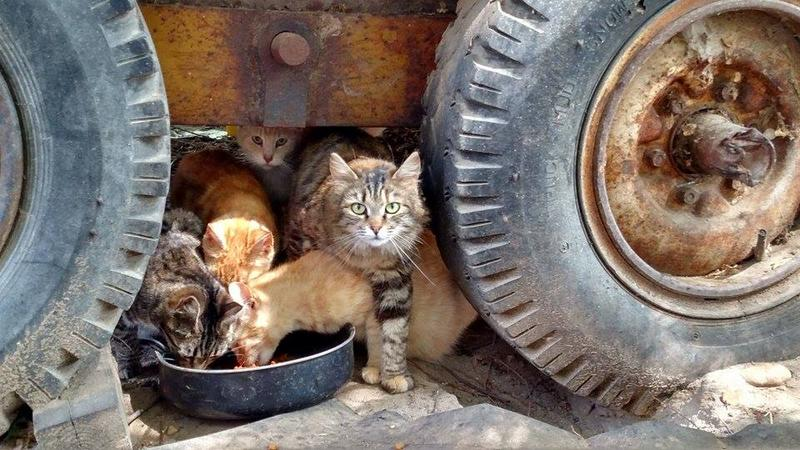 SNIP helps pay for pets and feral cats to get fixed to stop overpopulation.