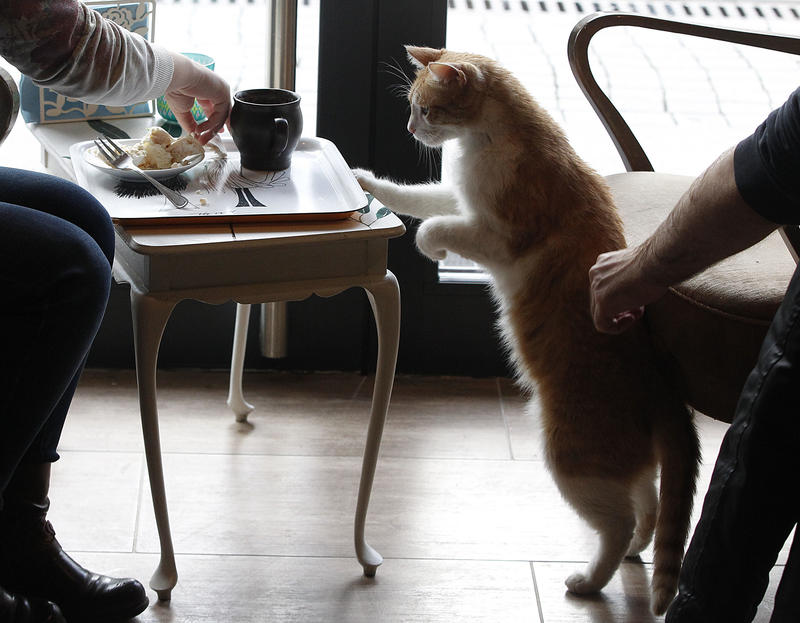 "People have tea and coffee in the company of cats at a new ""Miau Cafe"" in Warsaw, Poland. The owners believe that drinking with the cats helps create a calm atmosphere for its customers, and also have another cafe in the town of Krakow."