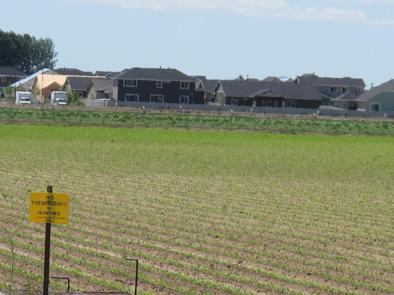 Boise natives are moving to subdivisions like this one in Kuna, which are cropping up next to farm fields and pastures.