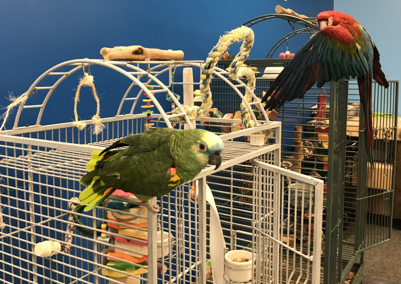 Parrots 'N' Stuff (employees and birds) has settled into its new home on Overland Road in Boise.