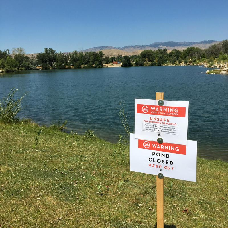 Blue-green algae is toxic in large quantities, according to the Idaho Department of Environmental Quality.