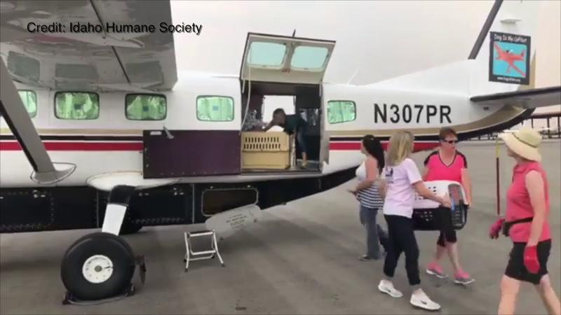 Idaho Humane Society volunteers unload a Dog Is MyCoPilot plane of 29 dogs rescued from San Antonio.  They will be put up for adoption in Boise.