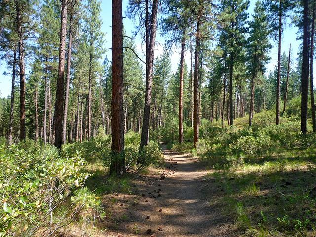 Forest managers will burn some parts of the landscape this fall to prevent future wildfires that might get out of control.