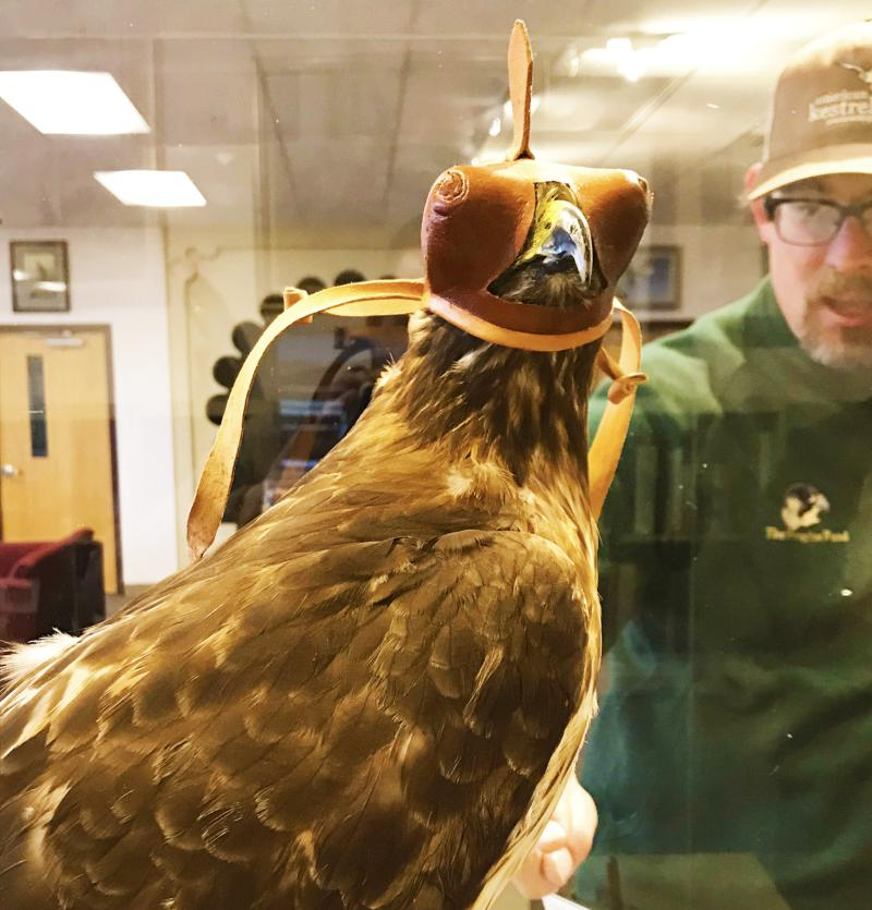 How much do you know about the history of falconry? We knew next to nothing and left feeling awestruck, to say the least.