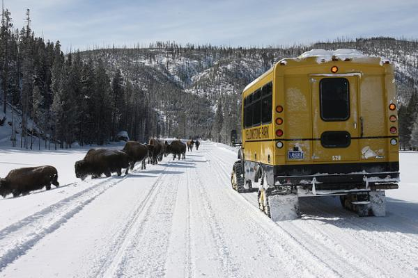 yellowstone, winter, bison, snowcoach