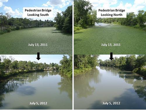 U.S. Fish and Wildlife Service photography of the results of a four-year water chestnut eradication program