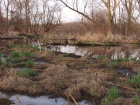 Spring beaver pond at Nahant Marsh
