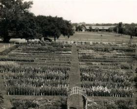 Horticulture Gardens at Iowa State University 1922