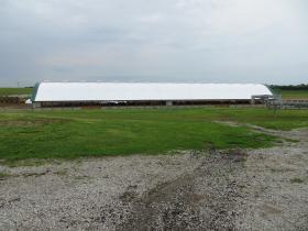 An alternative housing unit for cattle on the Schneider farm near Lone Tree