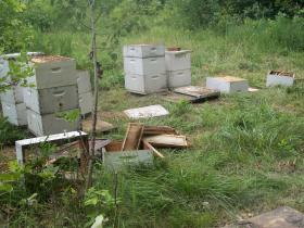 These beehives are believed to have been damaged by a female black bear and her two cubs spotted on the border of Clayton and Fayette Counties. Bear scat and prints were found near the hives.