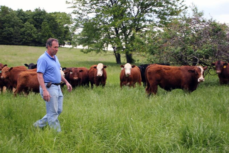 Chris Boeckmann grows turkeys for Cargill on his Loose Creek, Mo., farm. But he also raises grass-fed all-natural beef for his private label.