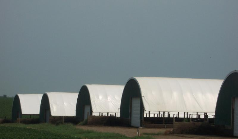 Row of six hoop barns at Grand Meadow Feeders near Washta