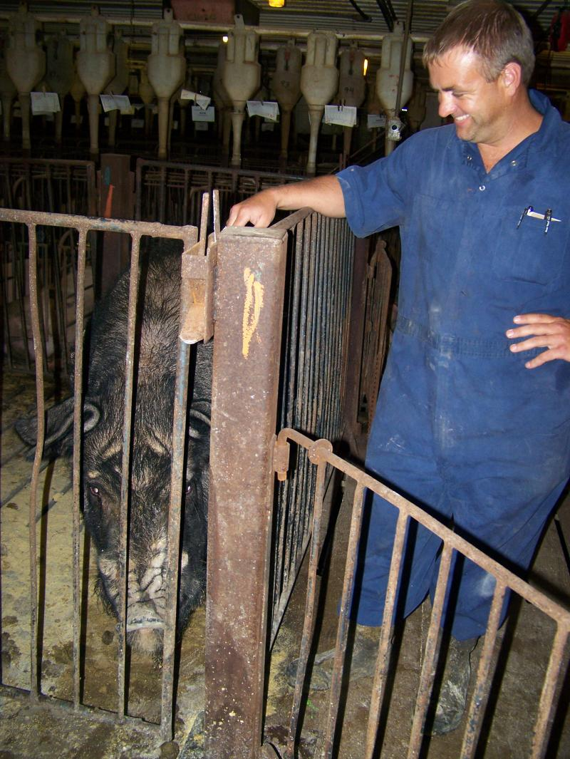Dan Sander, an employee of Elite Pork Partnership, stands beside one of the few boars kept among the thousands of sows at the farm.