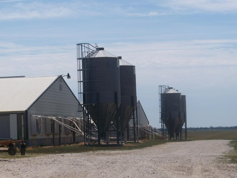 This is one of several locations around Carroll, Iowa, where Elite Pork Partnership keeps sows and piglets.