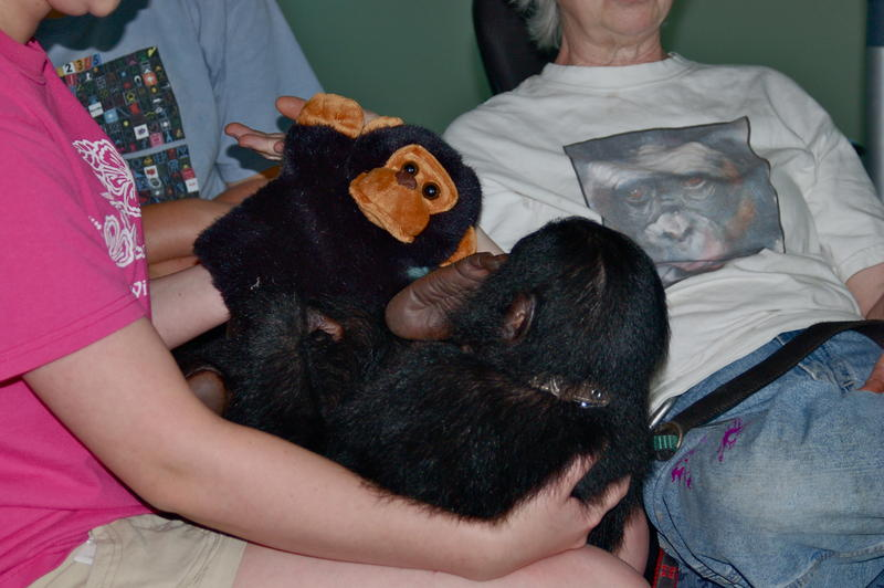 Heather Pugh, who grew up with the bonobos, plays with Teco