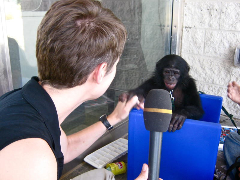 """Talk of Iowa"" host Charity Nebbe meets 2-year-old bonobo, Teco"