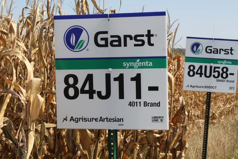 Syngenta's drought resistant corn just before harvest in Maxwell, IA.