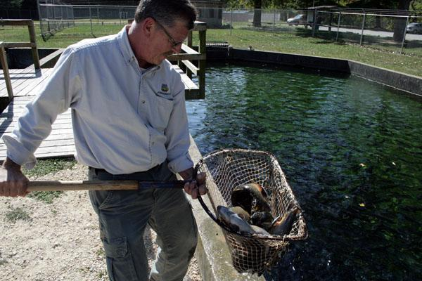 Manchester Fish Hatchery Manager Dave Marolf holds a net with Brook and Rainbow trout. The DNR has released 15,000 trout into northeast Iowa's streams because of low stream levels.