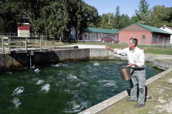 Dave Marolf, the trout hatchery manager in Manchester, feeds a pool of 2013's trout population. Marolf said droughts impacts fisheries a year after it hit the agriculture industry.