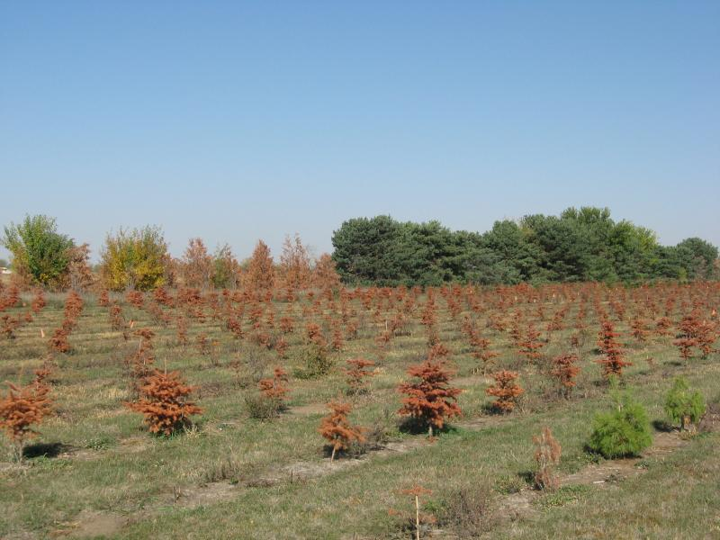 Trees lost in the drought are not covered by farm subsidies