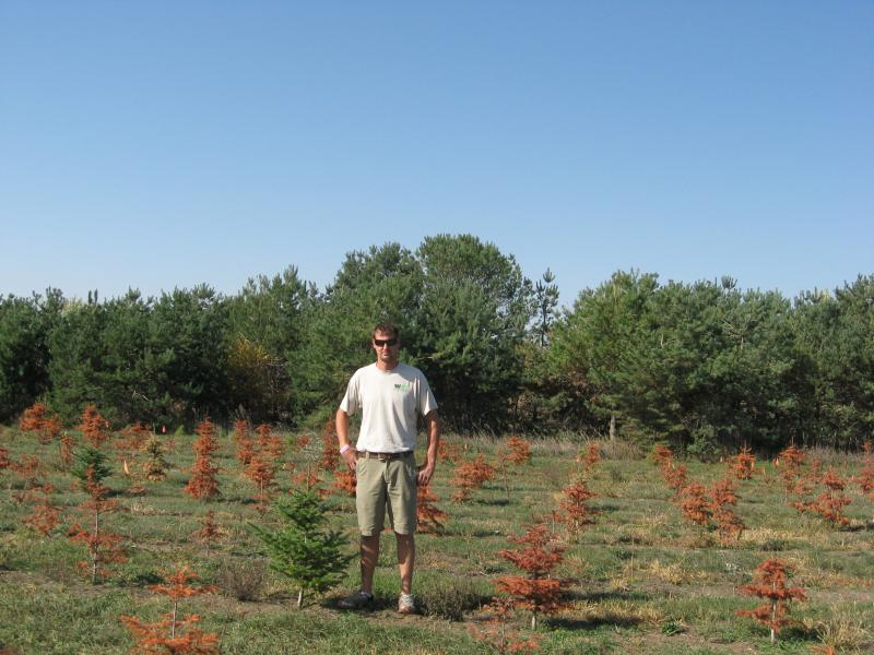 Kris Kringle's Tree Farm owner Danny Moulds stands among the thousands of trees lost to the drought