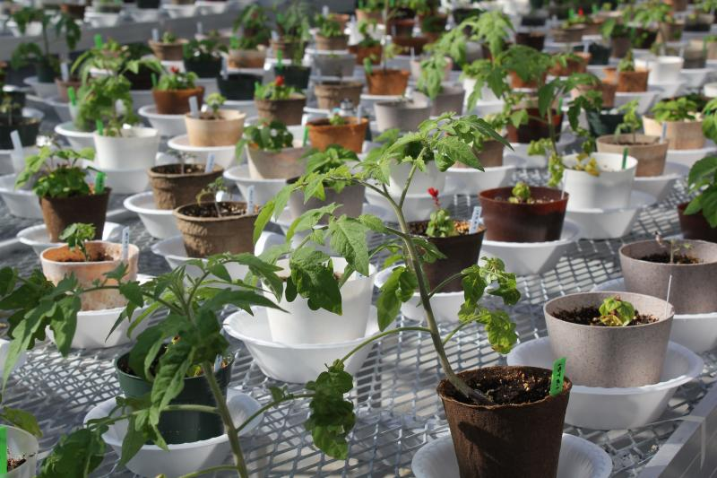 A Farm Bill program funds this project exploring biorenewable replacements for planting pots.