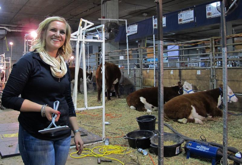 "Maddee Moore, a ""cow-fitter,"" helps competing heifers look their best at the American Royal livestock show."