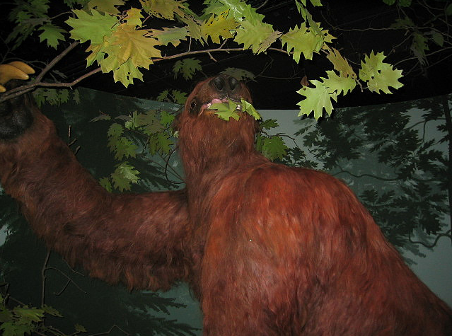 Giant sloth at the Museum of Natural History, University of Iowa