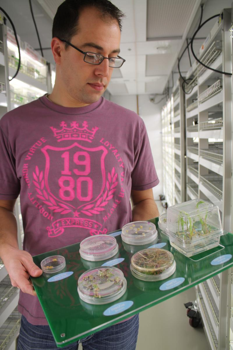 Monsanto research associate Ben Schaefer holds a display of seeds at various stages of development.